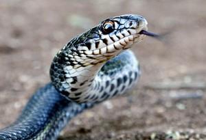 snake_catcher