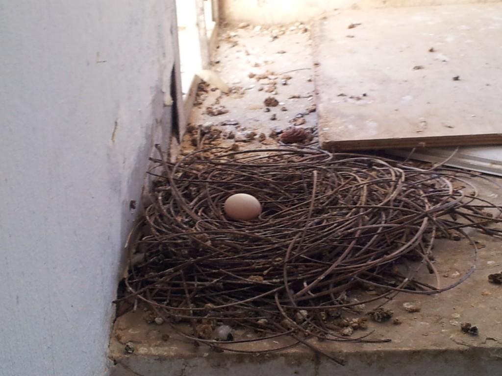 голубиное-гнездо