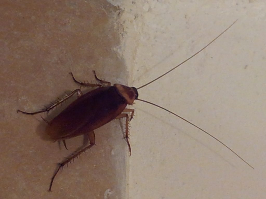 тараканы-израиль