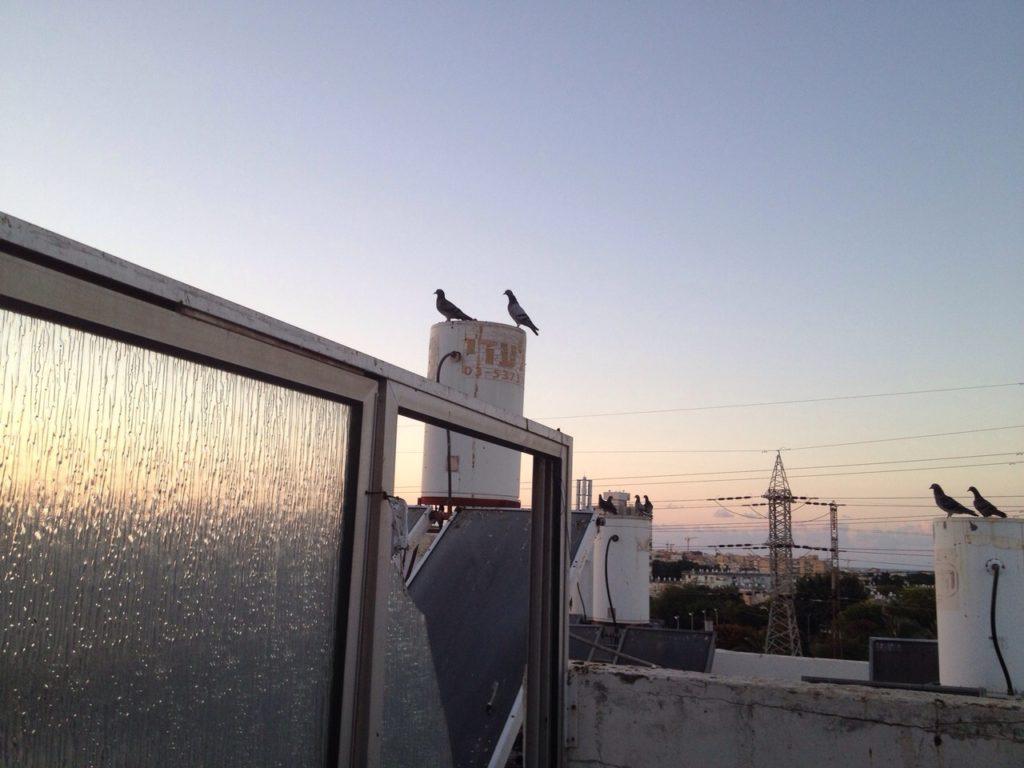 птицы_на_балконе