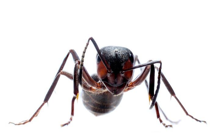 муравьи-в-израиле