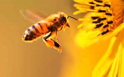 пчелы-израиль