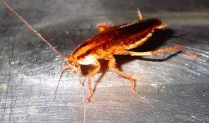 маленькие-тараканы-на-кухне
