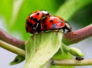 насекомые-виды