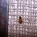 мебельный-таракан-израиль