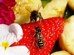 Пчелы и осы. Почет и презрение. Так ли все однозначно?