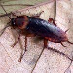 почему тараканы такие живучие