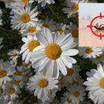 Пиретроиды – основная группа веществ для дезинсекции насекомых в Израиле